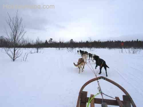 Kiruna (Dogsledding)