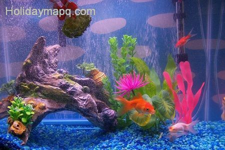 Fish tank decorations - Fish tank christmas decorations ...