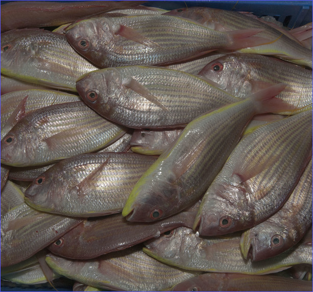 doha_central_fish-pink_fish_central_fish_market.jpg