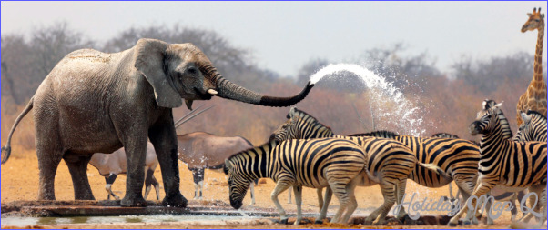 Africa Wildlife Travel Packages_0.jpg