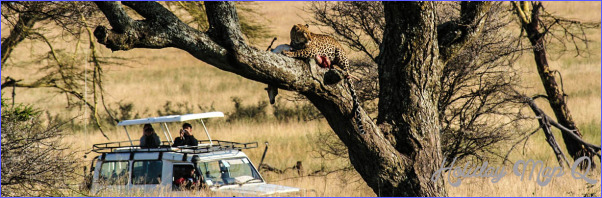 Africa Wildlife Travel Packages_5.jpg