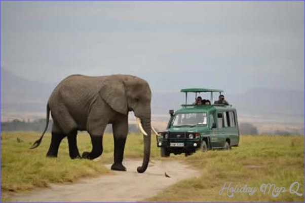Kenya Wildlife Travel Guide_5.jpg