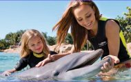 Available Packages & Pricing Options | Discovery Cove Orlando