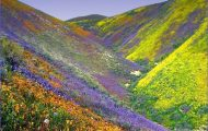 Valley of Flowers India_4.jpg