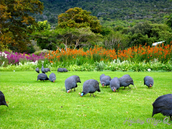 Kirstenbosch National Botanical Garden Trip Planning_13.jpg
