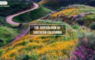 CALIFORNIA SUPER BLOOM HOW WE CHASED WILD FLOWERS THAT HAPPEN ONCE EVERY 15 YEARS_0.jpg