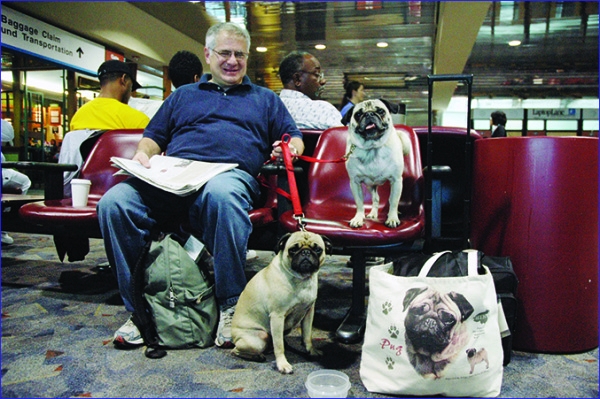 How to Prepare for Your Dog's First Trip Abroad_11.jpg
