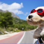 How to Prepare for Your Dog's First Trip Abroad_6.jpg