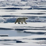 Armed guards protect navy privates and scientists from polar bears