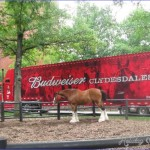 Clydesdale horses start your tour - Picture of Budweiser Brewery