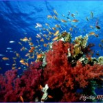 Diving in Thailand | Dive The World Vacations