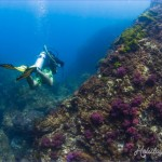 scuba diving and snorkelling adventures in Thailand