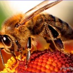 Bee a Part of It! Oregon Honey Festival This Weekend!
