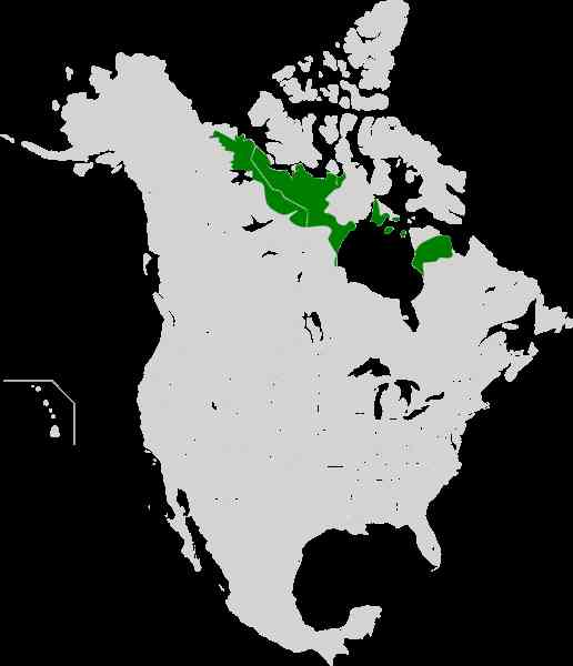 map of arctic tundra 8 Map Of Arctic Tundra